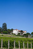 Italian charming villa in vineyard Royalty Free Stock Images