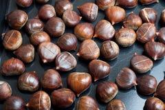 Italian Chestnut Stock Image