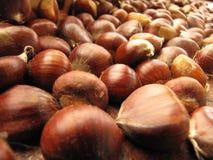 Italian chestnut Royalty Free Stock Photos