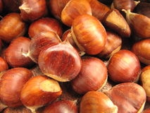 Italian chestnut Royalty Free Stock Photos