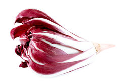 Italian chicory royalty free stock images