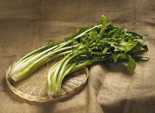 Italian chicory  catalogna. Type of chicory with large leaves Royalty Free Stock Photography