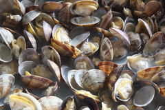 Italian Clams Royalty Free Stock Photography