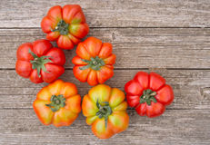 Italian Costoluto tomatoes on garden bench - traditional variety Stock Images