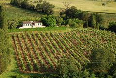 Italian country farm. A typical Italian country farm in Marche with a beautiful wineyard Stock Photos