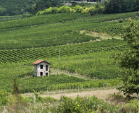 Italian Country Side. Small building in the middle of a vineyard Stock Photos