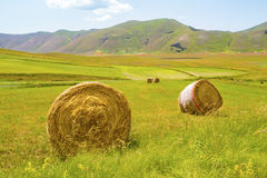 Italian countryside. Beautuful italian landscape with hay bales stock image