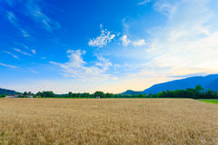 Italian countryside landscape Royalty Free Stock Image