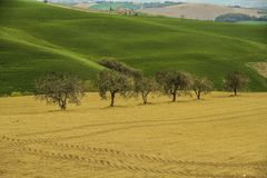 Italian countryside near Cingoli lake. Colorful meadows and some olive trees stock photo