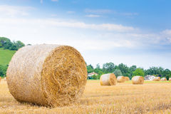 Italian countryside panorama. Round bales on wheat field Stock Photography