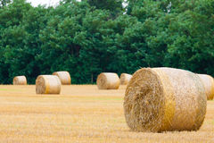 Italian countryside panorama. Round bales on wheat field Royalty Free Stock Photography