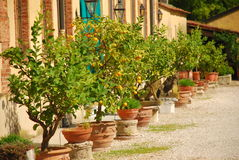 Italian courtyard with potted lemon trees. Potted citrus plants in a typical italian courtyard royalty free stock photography