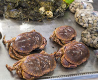 Free Italian Crab Royalty Free Stock Photos - 30921288