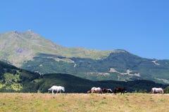 Italian Domestic horses. Mammals transport sky mountains green blue Royalty Free Stock Image