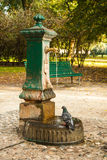 Italian drinking well in a park with water and pigeon. Stock Photography
