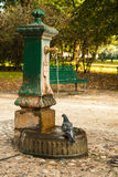 Italian drinking well in a park with water and pigeon. Stock Image