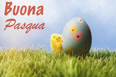 Italian easter greeting text; Blue easter egg and chicken. Italian greeting text wishing happy easter; Small yellow chick hiding behing a painted blue easter egg royalty free stock images