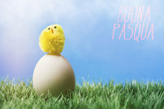 Italian easter greeting text; Chick standing egg. Italian greeting text wishing happy easter; Small chick standing on top of an white egg, in grass on blue royalty free stock photo