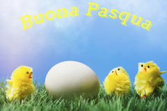 Italian easter greeting text; Group of chicks surrounding egg. Italian greeting text wishing happy easter; Three chicks surrounding an egg, standing on grass in royalty free stock images