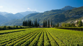 Italian Farm. A typical farm in at the foot of tall mountains near Riva Del Garda Royalty Free Stock Photo