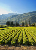Italian Farm. A typical farm in at the foot of tall mountains near Riva Del Garda Royalty Free Stock Photos