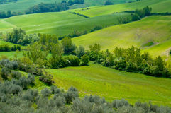 Italian fields Royalty Free Stock Images