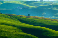 Italian fields Stock Photo