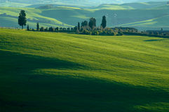 Italian fields Stock Photos