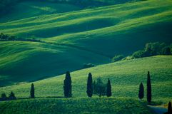 Italian fields Royalty Free Stock Photo