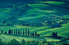 Italian fields Royalty Free Stock Image