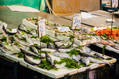 Fish Market Species Royalty Free Stock Image
