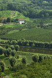 Italian fishing pond...in wine country Stock Images