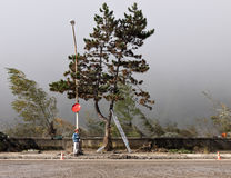 Italian floods aftermath - tree felling Stock Image