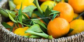 Italian fresh tangerines in a basket Stock Photo