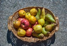 Fruit basket with red and yellow Apples and some Pears Royalty Free Stock Photography