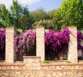 Italian garden. Carden Giardino Scotto in Pisa, Italy Stock Photos