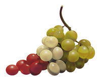 Italian Grapes Royalty Free Stock Photography