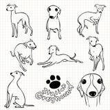 Italian Greyhound dog Stock Photo