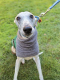 Italian greyhound on a leash Royalty Free Stock Photos