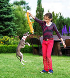 Italian Greyhound playing in countryside park royalty free stock photos