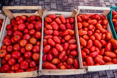 Italian heirloom and san marzano tomatoes heap in wood cases. Market stall wood cases  full of different tomatoes varieties italian heirloom and san marzano Stock Image