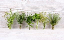 Italian herbs in bundle on white wooden Stock Image