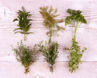 Italian herbs in bundle on white wooden background Stock Images