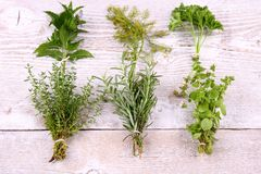 Italian herbs in bundle on wooden background Stock Images