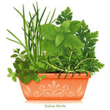 Italian Herbs in Clay Planter. Rosemary, Fennel, Flat Leaf Parsley, Thyme, Oregano, and Lavender in a terracotta flower pot, left to right. Herbes de Provence is Royalty Free Stock Photo