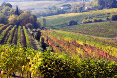 Italian hills. Landscape of romagna - italy, valley with rows of grapevine Royalty Free Stock Photography