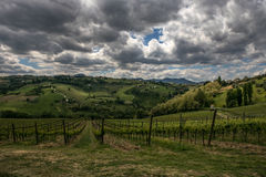 Italian hills and vineyard. Green hills and vineyard in spring royalty free stock photography