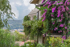Italian House with Bougainvilleas. View over the Roman village from the little house with Bougainvilleas Stock Image