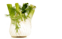 Italian job. Italian dill separated on white background Royalty Free Stock Images