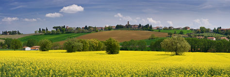 Italian landscape. Tuscany, field of agricultural flowers royalty free stock photo